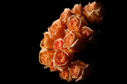Peach Colored Roses