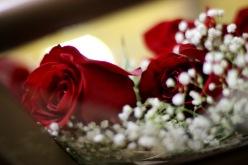 Homecoming Roses