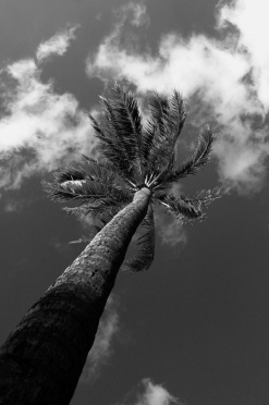 Coconut Palm and Sky