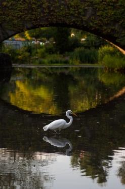 Heron in Central Park