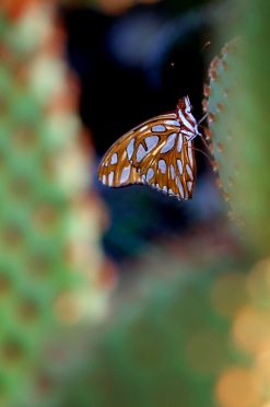 Butterfly on Cactus