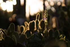 Image of Cactus and Flower at Sunset