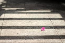 Image of Bougainvillea flower on the sidewalk