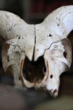 Skull in Ms. Franklin's Art Classroom