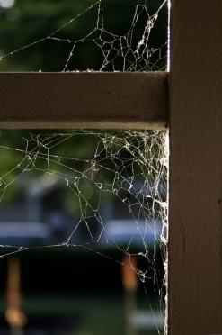 Cobwebs in a Window