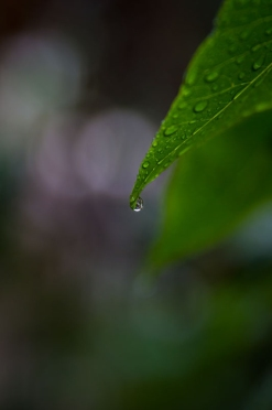 Single Raindrop