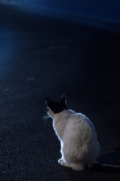 Stray cat in the evening light