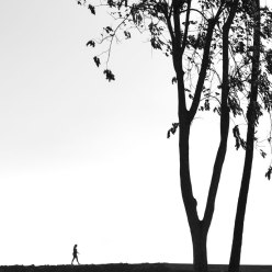 Tree and Person Walking