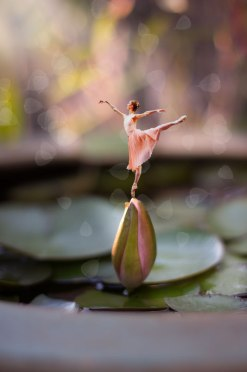 Ballerina on a Water Lily Bud