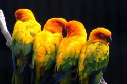 Four Birds on a Branch