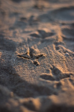 Tracks in the Sand