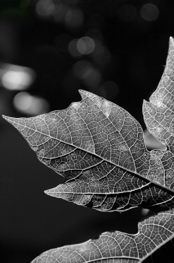 Intricate Veins