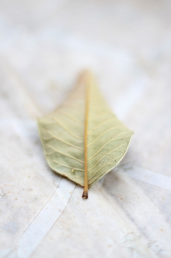Soft Leaf Textures
